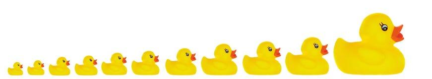 Brinquedo do pato da família ilustração stock