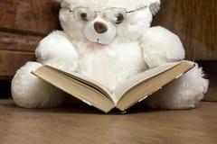 Brinquedo do urso branco com os vidros dos vidros que leem um livro Foto de Stock Royalty Free