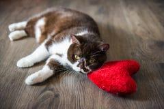 Brinquedo vermelho de aperto adormecido do coração do luxuoso macio do gato macio engraçado fotografia de stock royalty free