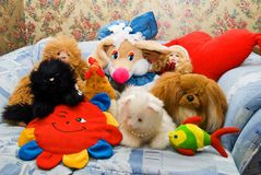 Brinquedos de Ordinar Fotografia de Stock Royalty Free