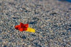 Brinquedos esquecidos após um dia na praia Imagem de Stock