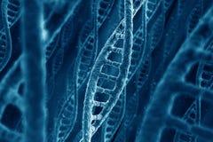Brins d'ADN Photographie stock libre de droits