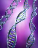 Brins d'ADN - simples et helice duelle Photos libres de droits
