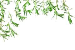 Brins de Rosemary comme cadre sur le fond blanc avec l'espace de copie photo libre de droits