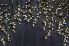 Brins du muguet sur le fond en bois bleu-foncé Image libre de droits