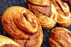 Brioche Style Cinnamon Buns Royalty Free Stock Photos