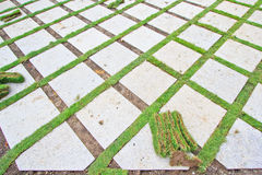 Brique et herbe Photographie stock