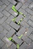 Brique et herbe grises Photographie stock