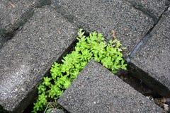Brique et herbe grises Images stock