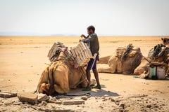 Briques de chargement de sel d'homme sur un chameau photographie stock libre de droits