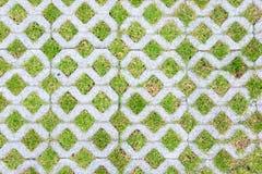 Briques de fond avec l'herbe Photo libre de droits