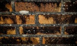 Briques de mur Photos stock
