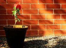 Briques rouges Photos stock