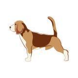 Briquet, chien Photos libres de droits