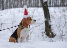 Briquet dans un chapeau rouge de Noël Photographie stock libre de droits