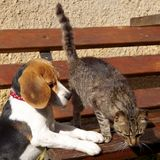 Briquet et chat de chien Photographie stock libre de droits