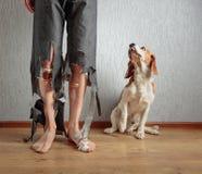 Briquet et son propriétaire dans le pantalon déchiré et les pieds mordus Image libre de droits