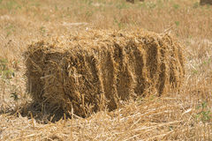 Briquette hay lying in the field Stock Photo