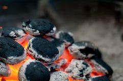 briquettesgaller Royaltyfria Foton