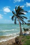 Brisa de mar 3 Imagem de Stock