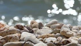 Brisa de mar almacen de metraje de vídeo