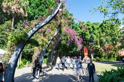 South Bank Grand Arbour running the length of South Bank parklands. Stock Photo