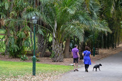 Brisbane City Botanic Gardens Royalty Free Stock Photography
