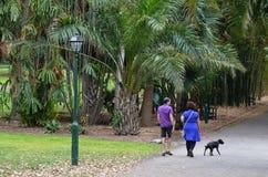 Brisbane City Botanic Gardens Royalty Free Stock Photography