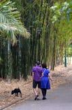 Brisbane City Botanic Gardens Royalty Free Stock Photo