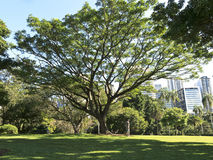 Brisbane City Park Stock Image