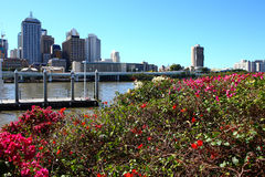 Brisbane city scenes Stock Images