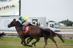 Brisbane Cup Royalty Free Stock Photography