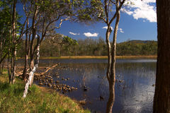 Brisbane Forrest Park Queensland Australia. Natural bushland wildlife nature natural blue sky lake trees ducks Stock Photos