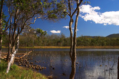 Brisbane Forrest Park Queensland Australia. Natural bushland wildlife nature natural blue sky lake trees ducks Stock Photo