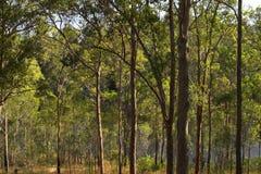 Brisbane Forrest Park Queensland Australia. Natural bushland wildlife nature natural blue sky lake trees ducks Royalty Free Stock Image