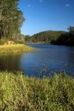 Brisbane Forrest Park Queensland Australia. Natural bushland wildlife nature natural blue sky lake trees ducks Stock Image