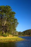 Brisbane Forrest Park Queensland Australia. Natural bushland wildlife nature natural blue sky lake trees ducks Royalty Free Stock Photos