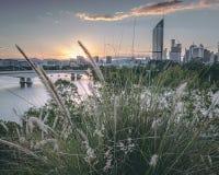 Brisbane i gr?splan fotografering för bildbyråer