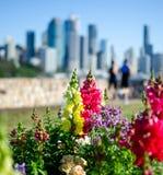 Brisbane miasta biegacz obrazy stock