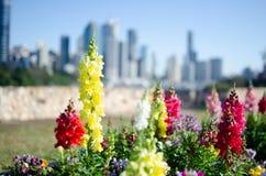 Brisbane miasto kwiecisty obrazy royalty free