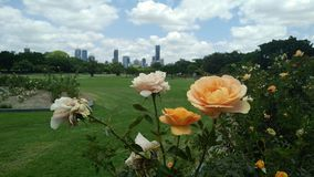 Brisbane-Stadt-Skyline-neuer Bauernhof-Park Stockbilder