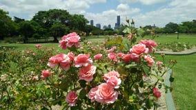 Brisbane-Stadt-Skyline vom neuen Bauernhof-Park Stockfotos
