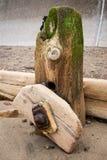 Brise-lames de Sandsend - brise-lames - Sandsend - North Yorkshire - le R-U Images libres de droits
