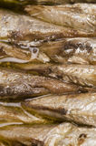brisling sardines from norway Royalty Free Stock Photos
