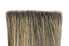 Bristle of brush. Close-up isolated on white background stock image