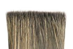 Bristle of brush Stock Image