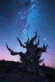 Bristlecone-Kiefernwald nachts Lizenzfreie Stockfotografie