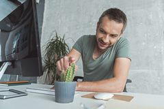 Bristled businessman is expressing gladness. Danger at work concept. Joyful young bearded employee is touching cactus while sitting at workplace with smile stock image