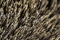 Bristles. A closeup view of hard bristles on a garden brush stock images