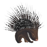 Bristling porcupine Royalty Free Stock Images